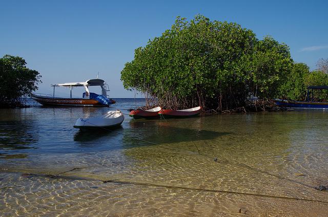 2015-05-11 Bali Nusa Lembongan Mangrove