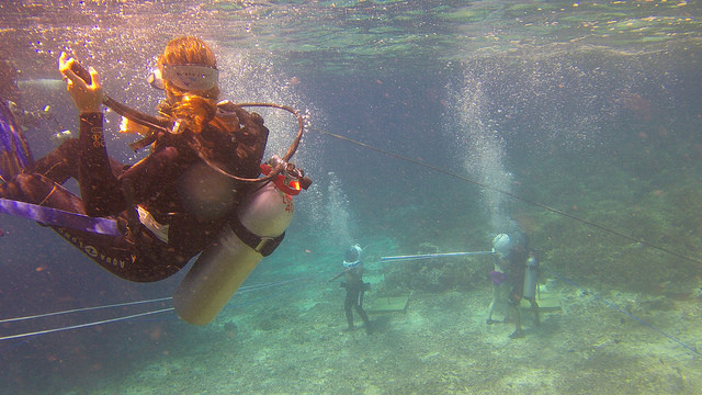 2015-05-11 Bali Plongee Nusa Lembongan Mangrove Point