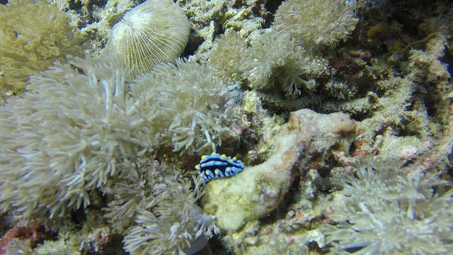 2015-05-11 Bali Plongee Nusa Penida Buyuk Point