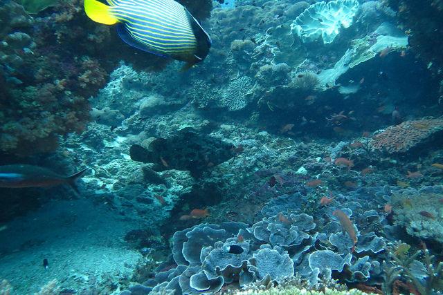 2015-05-12 Bali Plongee Nusa Penida Crystal Bay