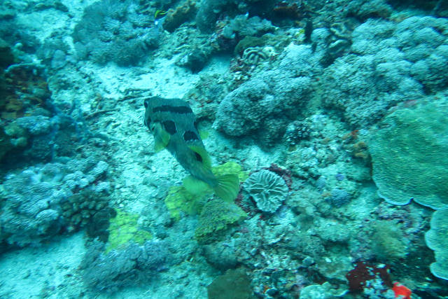2015-05-12 Bali Plongee Nusa Penida Pura Ped