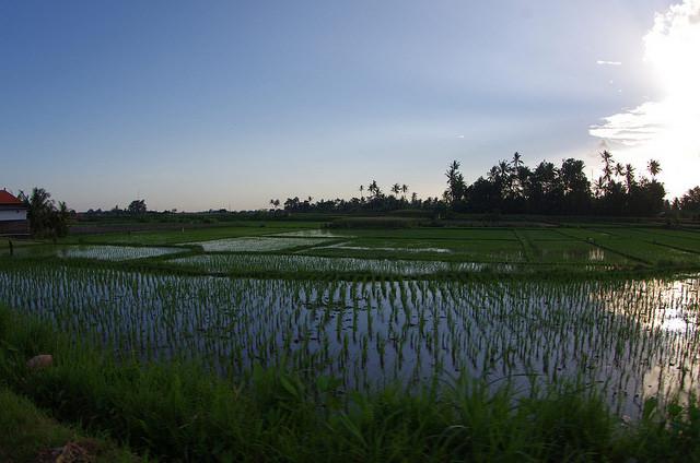 2015-05-13 Bali Ubud Rizieres