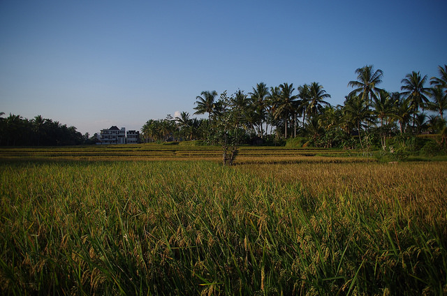 2015-05-14 Bali Ubud Rice Fields