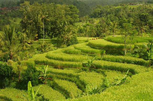2015-05-16 Bali Jatiluwih Rice Fields
