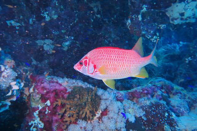 2015-09-21 Croisière St-John 205 Dangerous Reef