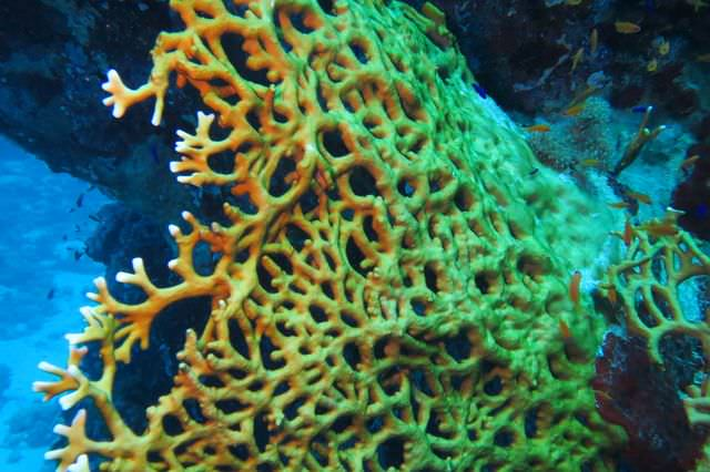 2015-09-21 Croisière St-John 206 Dangerous Reef