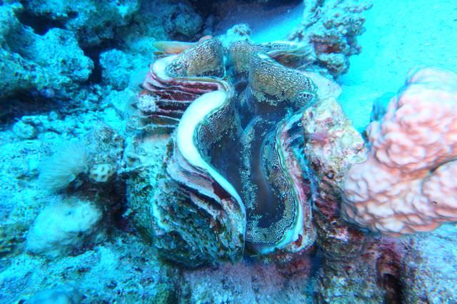 2015-09-21 Croisière St-John Dangerous Reef