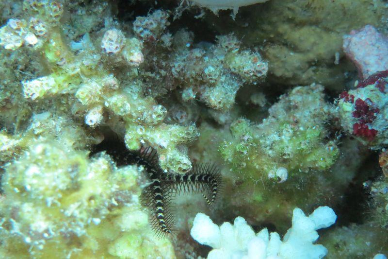 2015-09-25 Croisière St-John 022 Shaab Sharm Wadi Gimal