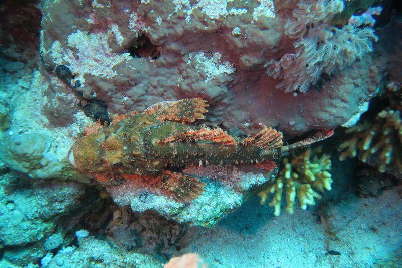 2015-09-25 Croisière St-John 061 Shaab Sharm Wadi Gimal