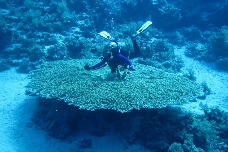 2015-09-25 Croisière St-John 059 Shaab Sharm Wadi Gimal