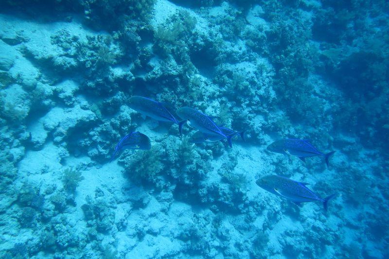 2015-09-25 Croisière St-John 070 Shaab Sharm Wadi Gimal