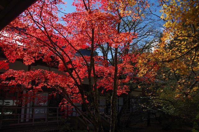 Japon - Koyasan Kongobuji Jardin Sec Zen