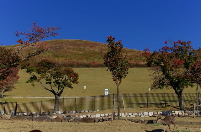 Japon - Nara colline Wakakusa-Yama