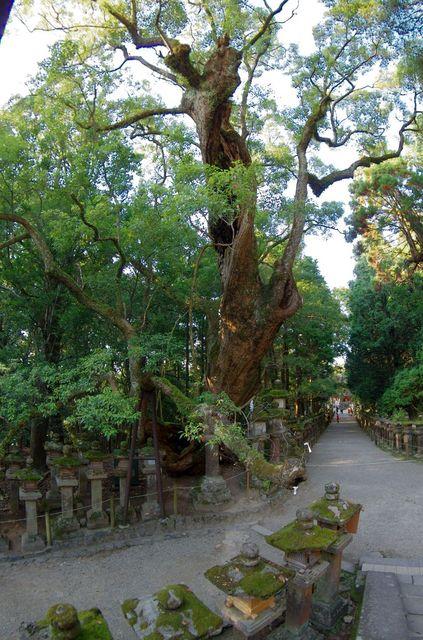 Japon - Nara Wakamiya Jinja