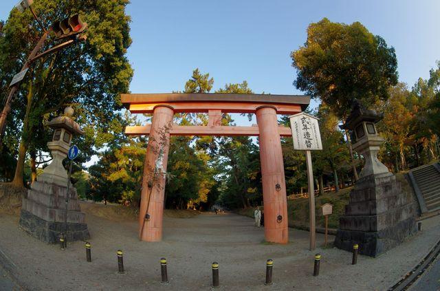 Japon - Nara Daims