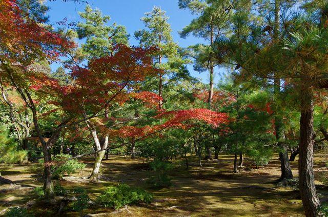 Japon - Kyoto Kinkaku-ji