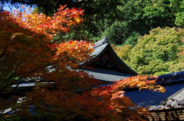 Japon - Kyoto Ryoan-Ji