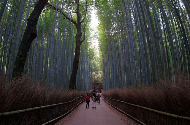 Japon - Kyoto - Arashiyama