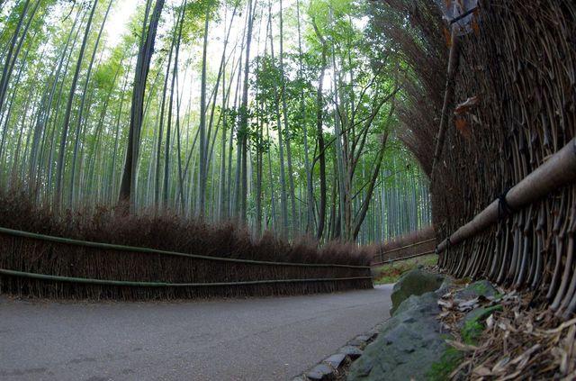 Japon - Kyoto bambouseraie Arashiyama