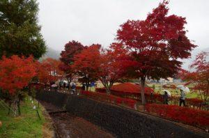Japon – Jour 11 : Lac Kawaguchi et Mont Fuji