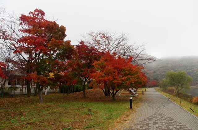 Japon - Erables Rouges Kawaguchiko