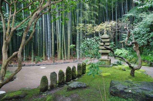 Japon - Kamakura Temple Hokoku Ji Bambouseraie