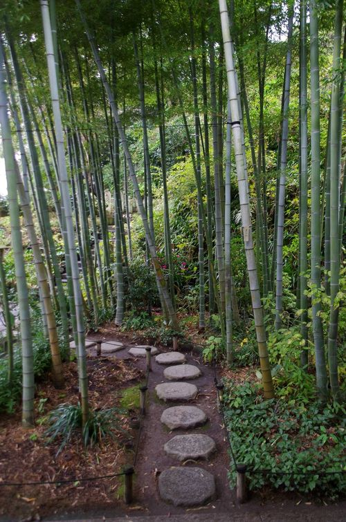 Japon - Kamakura temple Hase Dera Bamboo