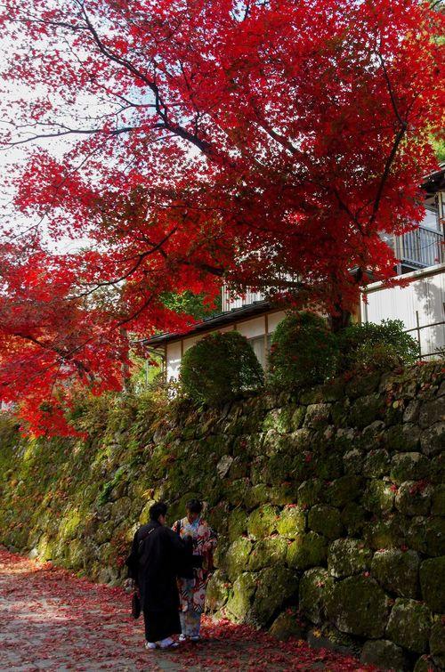 Japon - Nikko - sanctuaires