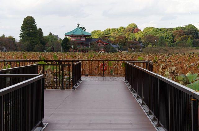 Japon - Tokyo - Ueno Shinobazu