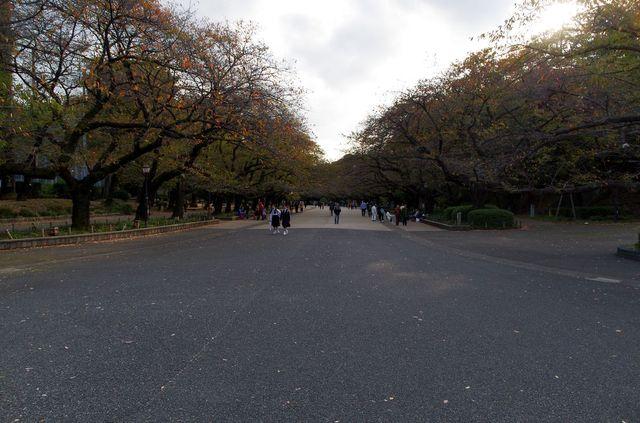 Japon - Tokyo - Ueno Tokyo National Muséum