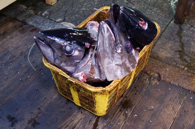 Japon - Tokyo - Tsukiji Fish Market