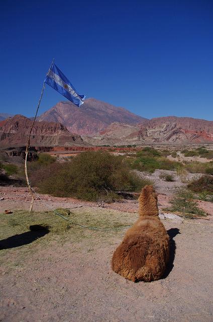 Jour 10 Argentine Quebrada Las Conchas Lama