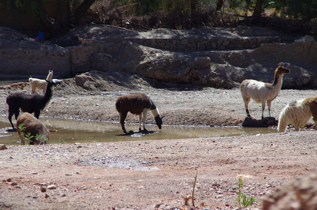 Jour 14 Bolivie Tupiza Quebrada Palala