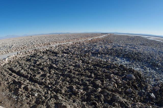 Jour 7 Chili Salar Atacama Laguna Chaxa