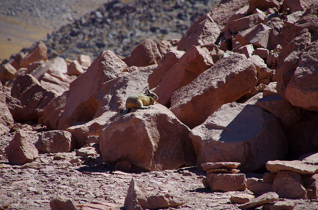 Jour 7 Chili Salar Tara Viscachas