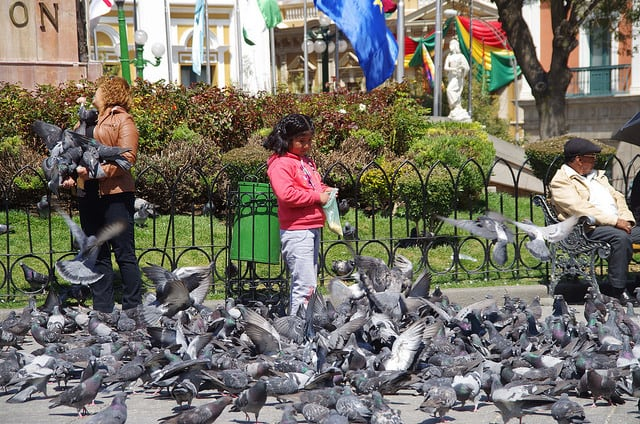Bolivie Visite La Paz Place Murillo Pigeons