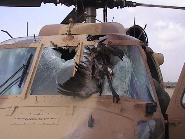 Accident davion impliquant des oiseaux